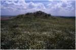 Vista del montículo de restos. Fotografía cedida por Jesús López Requena .